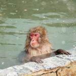 サウナで美肌になるには水風呂が必要な理由