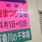 【4月に愛知県観光】おすすめは岩倉市の五条川桜まつりです!